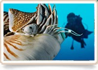 Basiscursus duikgeneeskunde deel 1, Palau 2018