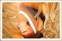 Level 1 cursus duikgeneeskunde deel 1 Manado. Binnenkort beschikbaar