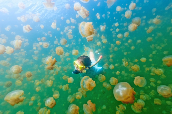 jellyfish lake palau diving